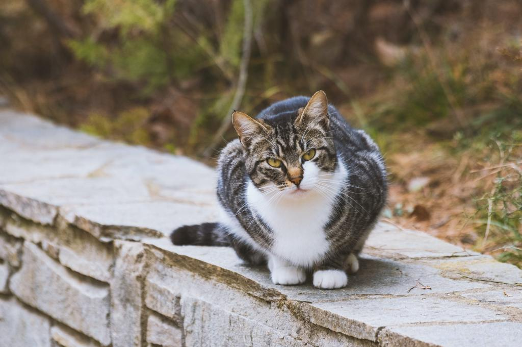 Image of a cat sitting on a stone wall and looking at the camera.